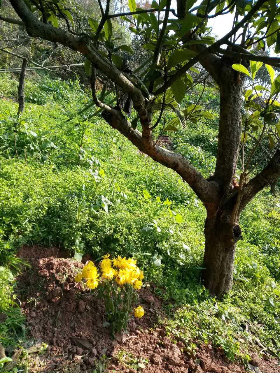 骨灰普通树葬,回归自然,与树融为一体